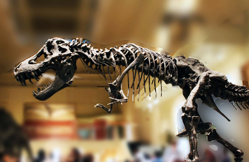 T Rex At The Smithsonian